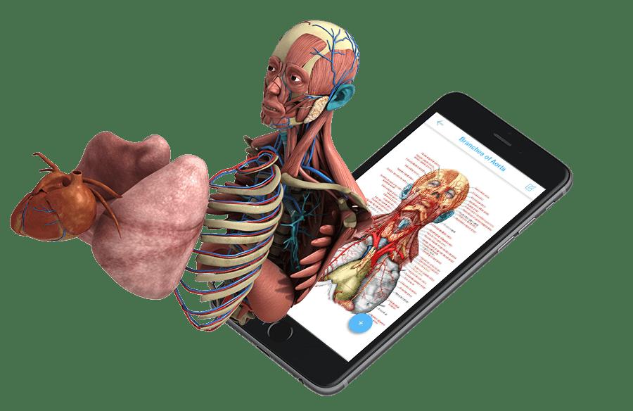 Rf Anatomy Ar Application Creatit Solutions